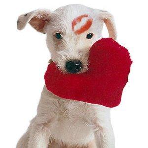 Valentine's Day, dog, pet