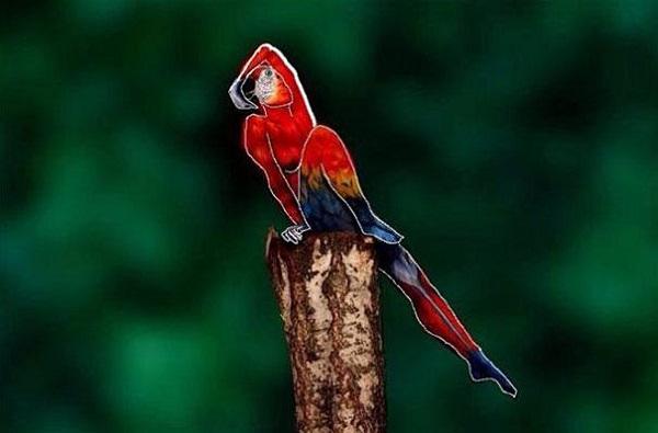 Johannes Stoetter, parrot, art, design, body art