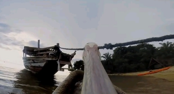 pelican, gopro, tanzania, cool, funny, fly