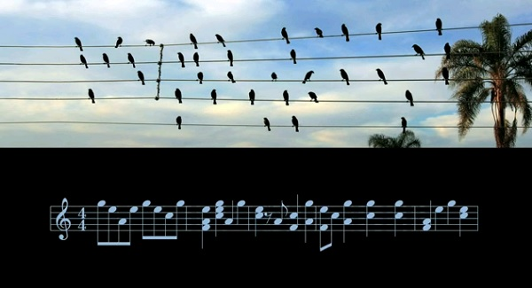 Musician Play Chords Based On Birds Position On Telephone Wires