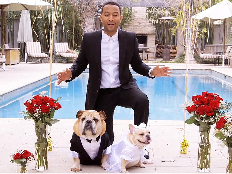John Legend and Chrissy Teigen Host a Dog Wedding for Charity ...