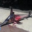 swordfish llanes