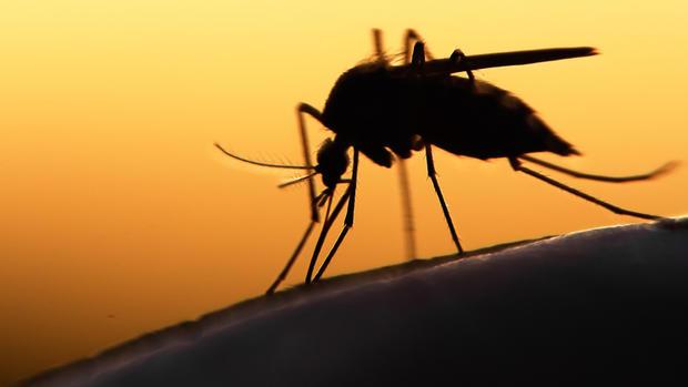 salud viajero en houston da positivo al virus del zika estados unidos salud brasil