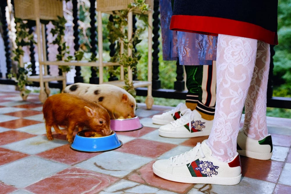 284747924460 Disney s  Three Little Pigs  Get Decked Out in Gucci for the Chinese ...
