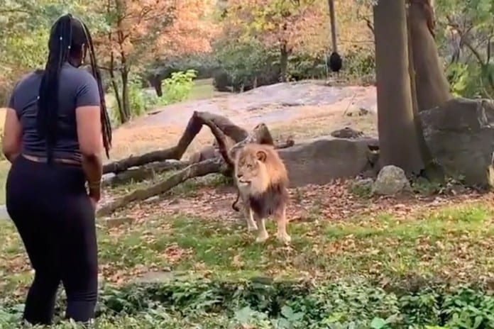 Bronx Zoo Responds to Viral Video of Woman in Lion's Den