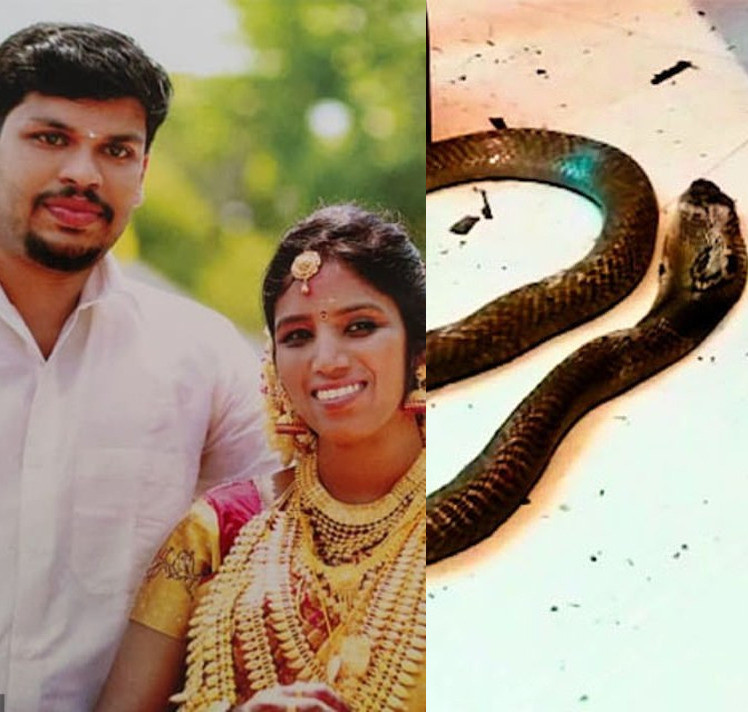 Man Kills Wife By Throwing a Snake at Her