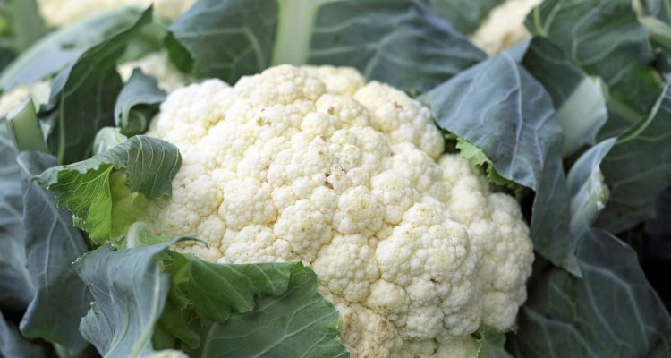 cauliflower 1465732 1920
