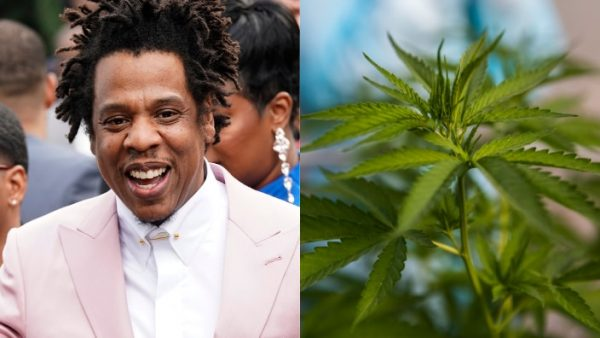 Jayz cannabis